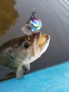 Hello Mr. Bass